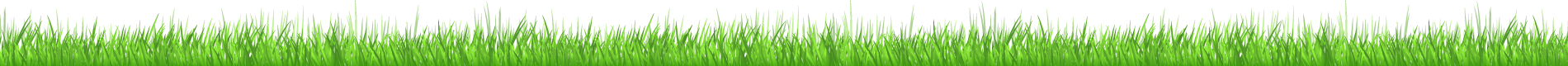 lawn care services salisbury md